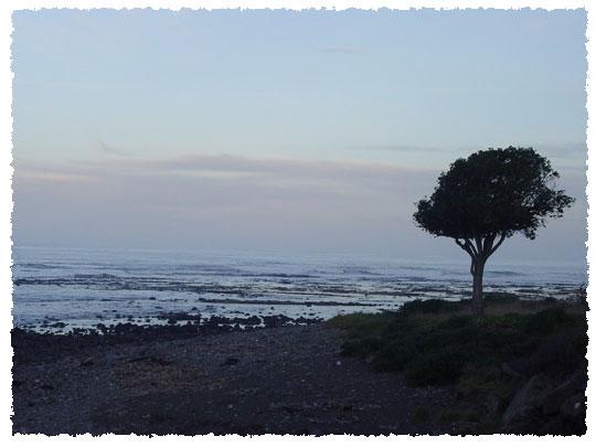 shoretree.jpg